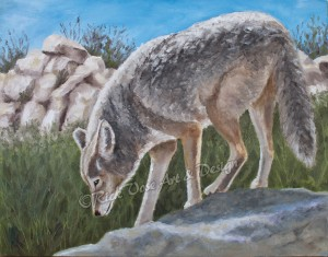 Southwestern Wildlife